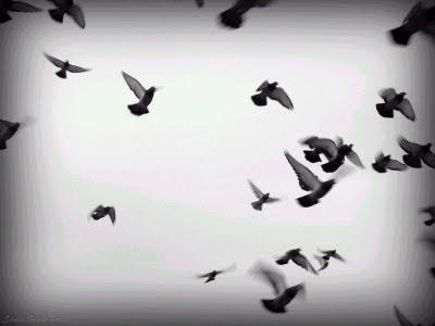 Aves_volando_blanco_y_negro[1]